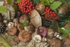 蘑菇和浆果 库存图片