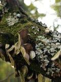 蘑菇和真菌在树在森林 免版税库存照片