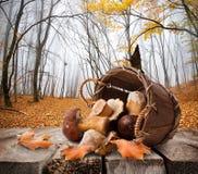 蘑菇和秋天森林 免版税图库摄影
