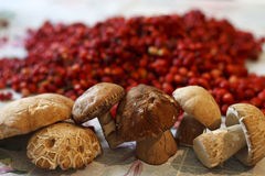 蘑菇和草莓 库存照片