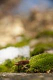 蘑菇和青苔在冬天 免版税库存照片