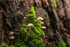 蘑菇和青苔本质上 免版税库存图片
