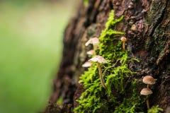 蘑菇和青苔本质上 库存图片