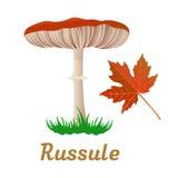 蘑菇唯一对象 免版税库存图片