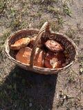 蘑菇在俄罗斯 免版税库存照片