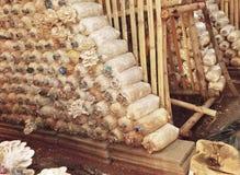 蘑菇在农场 免版税库存照片