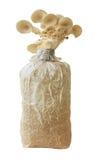 蘑菇在农场 免版税库存图片