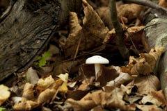 蘑菇在前面 免版税库存图片