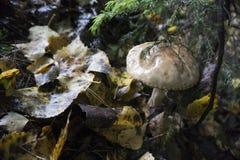蘑菇在地面上增长 免版税库存照片