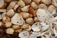 蘑菇在市场上 库存图片
