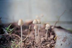 蘑菇在庭院里 库存图片