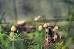 蘑菇在庭院里 库存照片