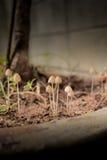 蘑菇在庭院里 免版税库存照片