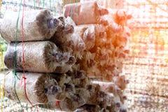 蘑菇在房子关闭耕种  免版税库存图片