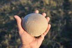 蘑菇在手上 库存图片