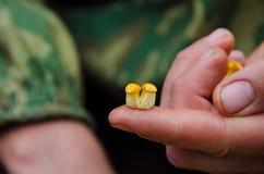黄蘑菇在手中 库存图片
