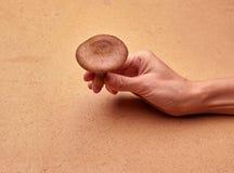 蘑菇在手边 免版税库存图片