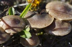 蘑菇在春天 免版税库存图片