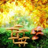蘑菇在晴朗的秋天森林里 库存照片