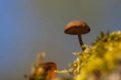 蘑菇在有花的夏天森林里 库存图片