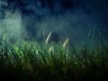 蘑菇在有雾的夜 免版税库存照片