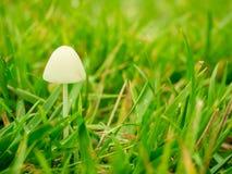 蘑菇在有雾的早晨 免版税图库摄影