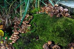 蘑菇在树干的森林里 免版税库存照片