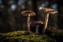 蘑菇在森林由太阳` s光照亮 库存图片