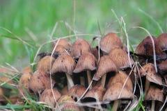 蘑菇在森林软的焦点 库存照片