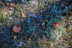 蘑菇在森林里 库存照片