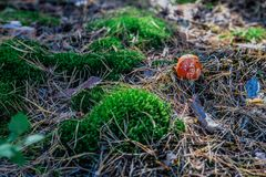 蘑菇在森林里 图库摄影