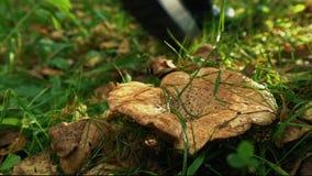 蘑菇在森林里 股票录像