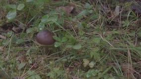 蘑菇在森林里 影视素材