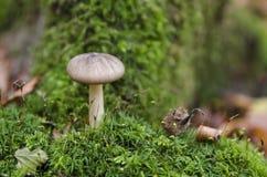 蘑菇在森林里 免版税图库摄影