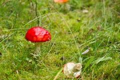 蘑菇在瑞典秋天森林里 免版税库存图片