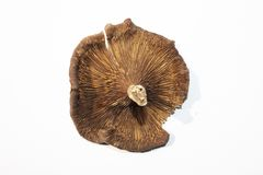 蘑菇在白色地面 库存图片