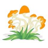 蘑菇在白色的例证集合被隔绝的 免版税图库摄影