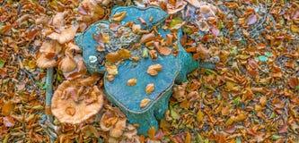 蘑菇在秋天的一个森林里 库存照片
