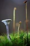 蘑菇在秋天 免版税库存图片