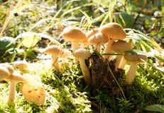 蘑菇在阳光下 库存图片