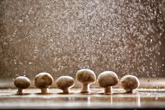 蘑菇在雨,食物艺术中 免版税库存图片