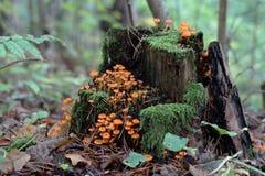 蘑菇城市 免版税图库摄影