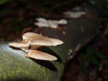 蘑菇增长 库存照片