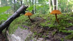 蘑菇夫妇 库存图片
