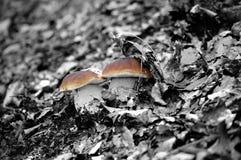 蘑菇孪生 免版税库存图片