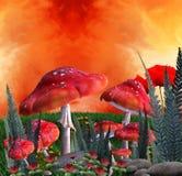 蘑菇安排 免版税图库摄影