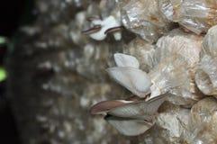 蘑菇室  库存图片