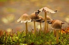 蘑菇家庭 免版税库存照片