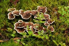 蘑菇家庭 库存图片