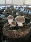 蘑菇家庭 免版税库存图片
